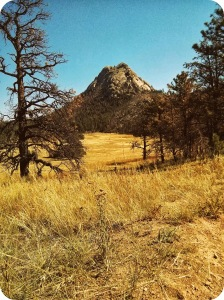 "Greyrock Mountain and meadow.  When I say ""lush"" I mean ""yellow."""
